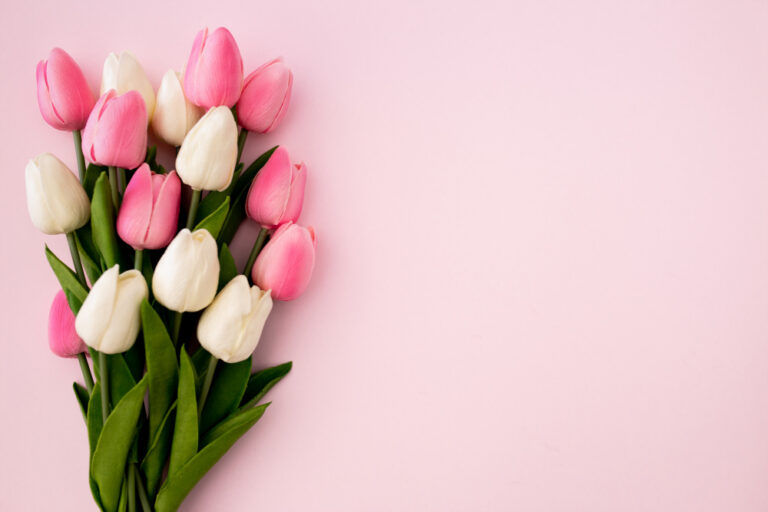 tulips-bouquet-pink